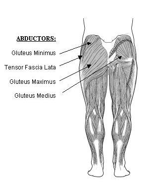 Abductor Muscles2