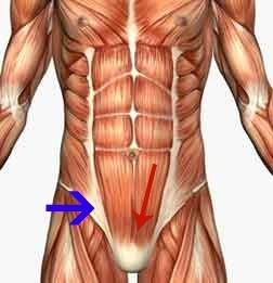 core-anatomy